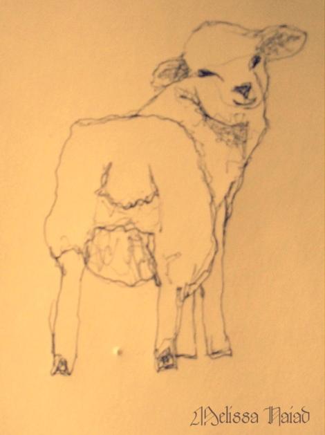 Sheep Drawing by Melissa Naiad