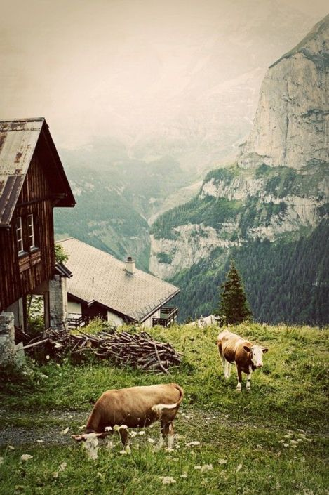 Morning in the Alps, via Aaron Huniu Photo, etsy
