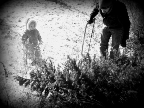 Wild Christmas Tree 3